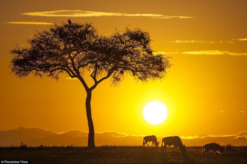 Alba in kenya e il risveglio degli gnu - dago fotogallery 10 Most Beautiful Places In The World National Geographic