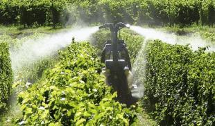 pesticidi vigneto