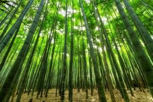 bambu' 10