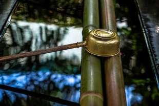 bambu' 2