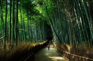 bambu' 4