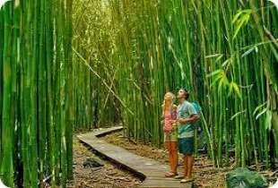 bambu' 9