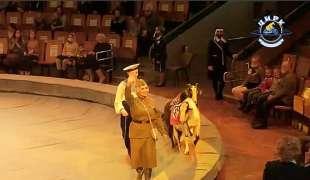 scimmia e capre con simboli nazisti al circo in russia 2