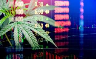 cannabis in borsa