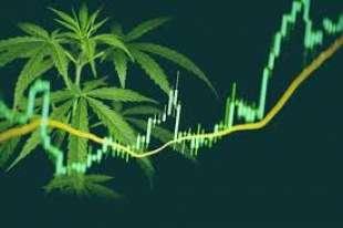 cannabis stocks 4