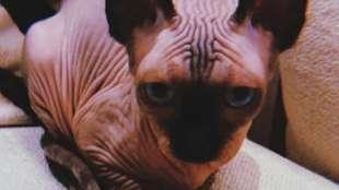 gatto pepe 5