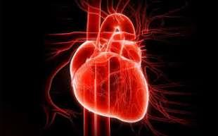linea piatta cuore 5