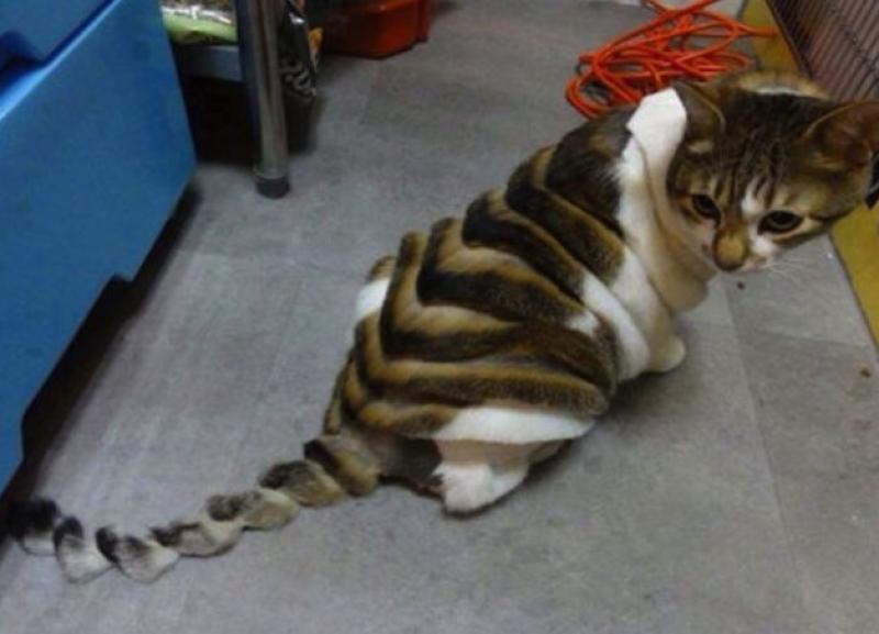 Barbieri Pazzi Un Cane Diventa Leone Il Gatto Si Trasforma In