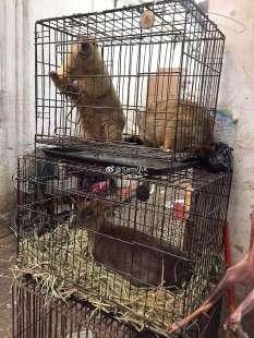 animali al mercato di wuhan