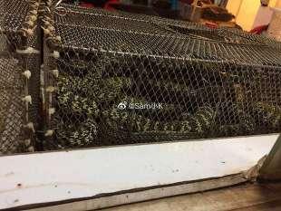 serpenti al mercato di wuhan
