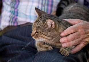 anziano e gatto 1