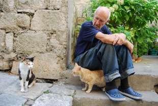 anziano e gatto 3