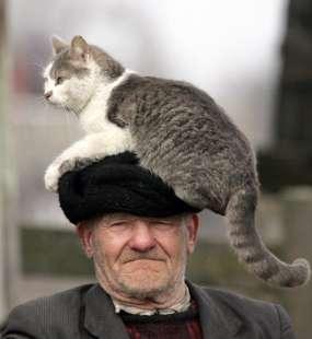 anziano e gatto 4