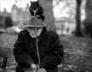 anziano e gatto 6