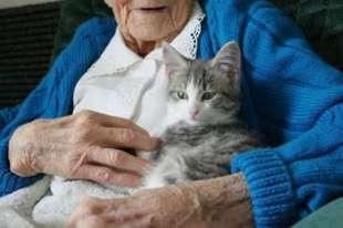 anziano e gatto 8