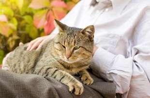 anziano e gatto 9