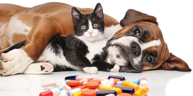 cane medicinali 4