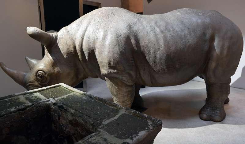 rhinoceros foto di bacco