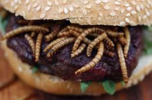 hamburger con insetti