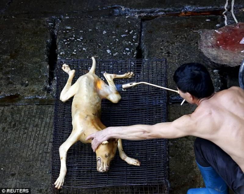 cane alla griglia in cina: http://m.dagospia.com/il-miglior-nemico-del-cane-le-tremende-foto-di-cani-squartati-cotti-e-mangiati-in-cina-103315/gallery