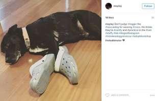cane crocs
