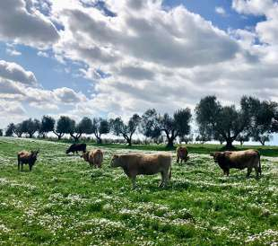 agricola-boccea - agricoltura biodinamica