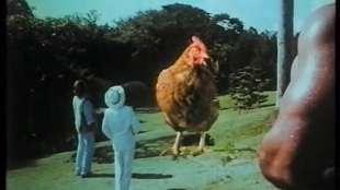 chicken park 2