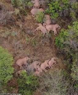 La mandria di elefante si riposa