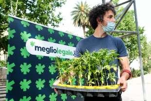la sardina mattia santori per la cannabis legale