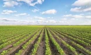 agricoltura 4
