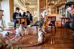 animal cafe giappone 11