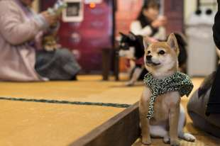 animal cafe giappone 12