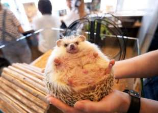animal cafe giappone 2