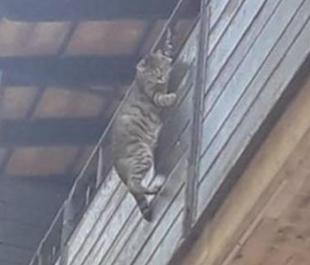 gatto appeso fuori dal balcone firenze