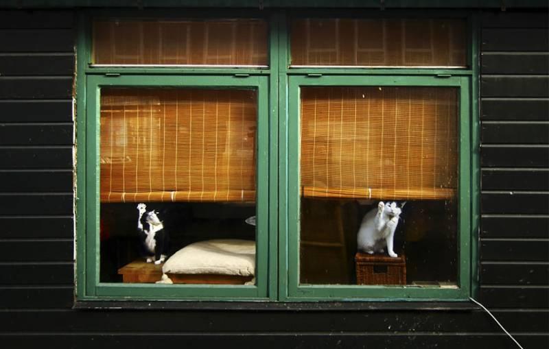 Animali alla finestra 14 animali alla finestra - Porno alla finestra ...