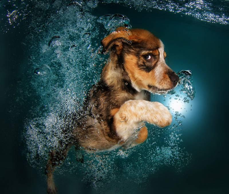 Cuccioli sott 39 acqua 4 cuccioli sott 39 acqua for Incollare sott acqua