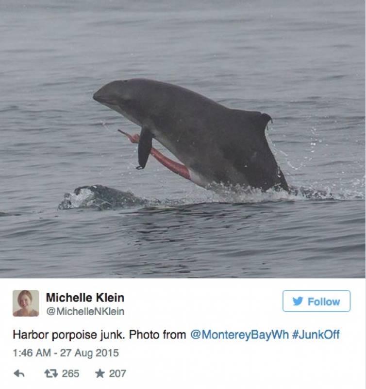 pene delfino