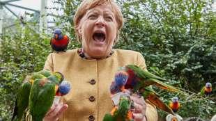 Angela Merkel pappagalli 3