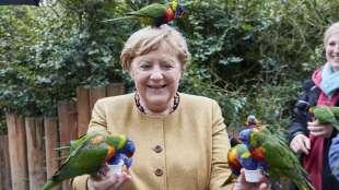 Angela Merkel pappagalli 4