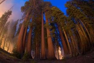 incendi sequoia national park 1