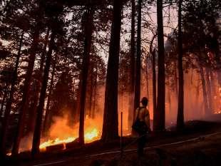 incendi sequoia national park 2