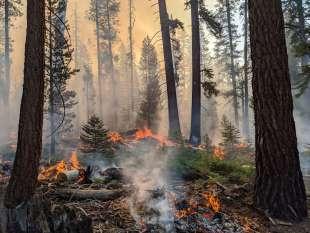 incendi sequoia national park 3
