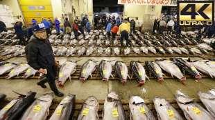 tonno tsukiji 4