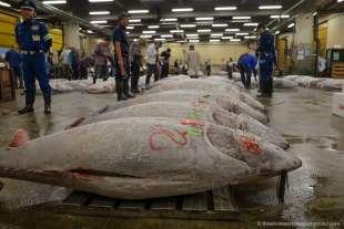 tonno tsukiji 5