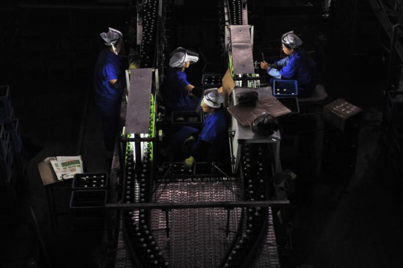 Operai al lavoro in una fabbrica di birra a Shenyang in Cina