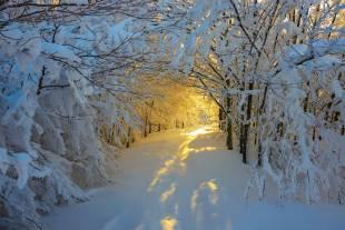 alba invernale nel parco nazionale di campigna, italia