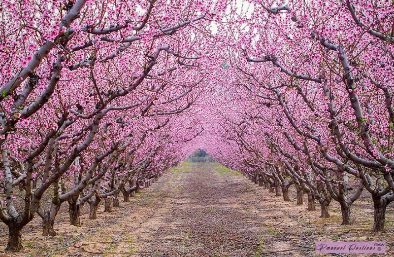 alberi in fiore immagini