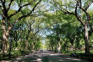 poet's walk, central park, new york, usa