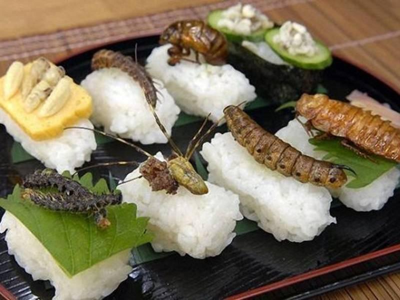 Cucina alternativa con insetti ed affini