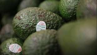 la guerra dei narcos per l'avocado 9